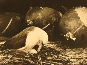 Midway Atoll in 1943