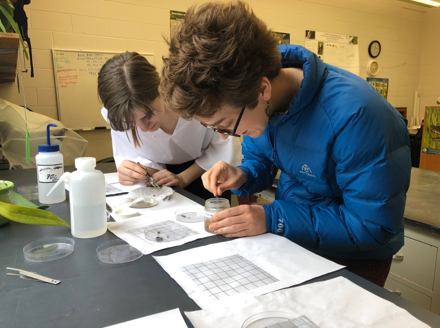 Wieteke Holthuijzen (blue jacket) alongside co-author and stellar undergraduate researcher Kaylee Rosenberger sort and identify arthropods captured on Midway Atoll Refuge from the lab at Northern Illinois University